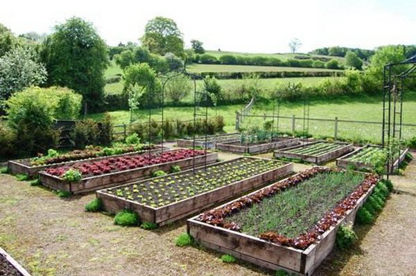 Фото сада и огорода своими руками фото