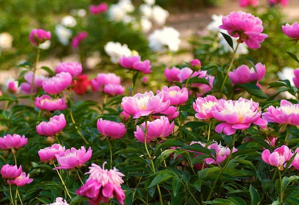 Разновидность цветов
