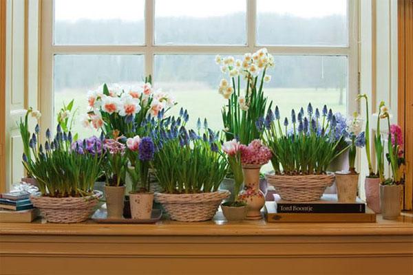 Горшки с цветами в кухне