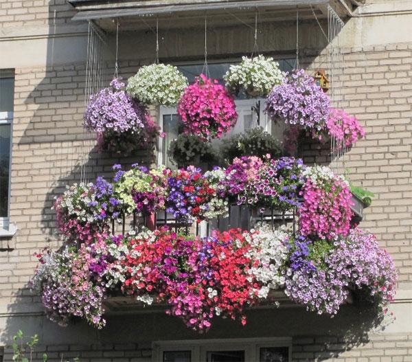 Использование матиолы в оформлении балкона