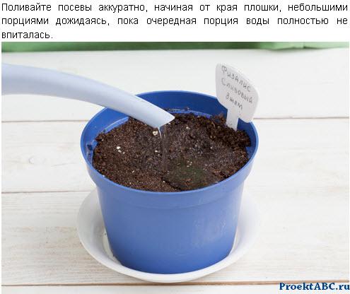 флизалис из семян