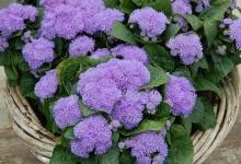 Садовые цветы названия и фото
